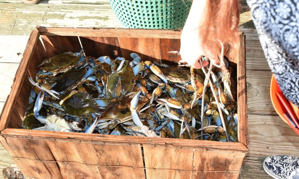 Blue Crab at Peace River Seafood Punta Gorda FL