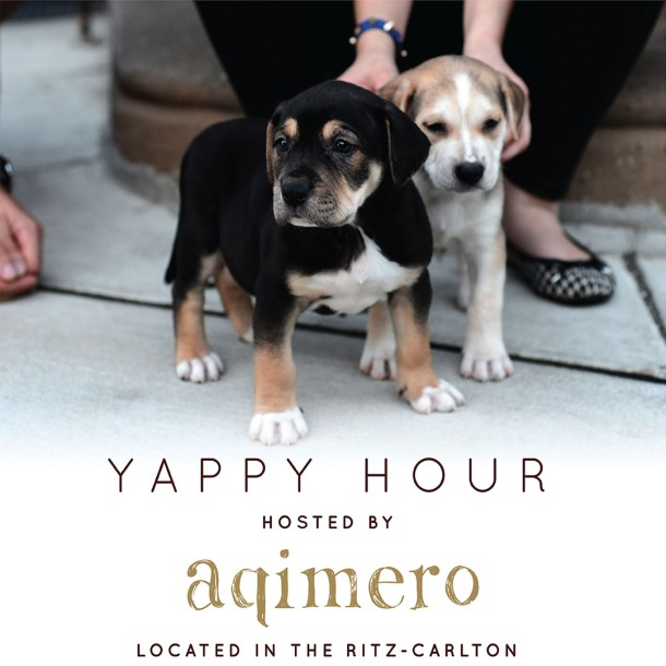 Aqimero Yappy Hour