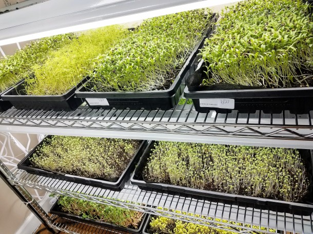 Indogrow Microgreens and Microherbs