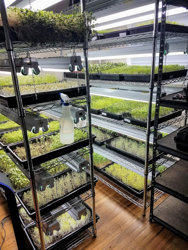 Indogrow Microgreens Racks